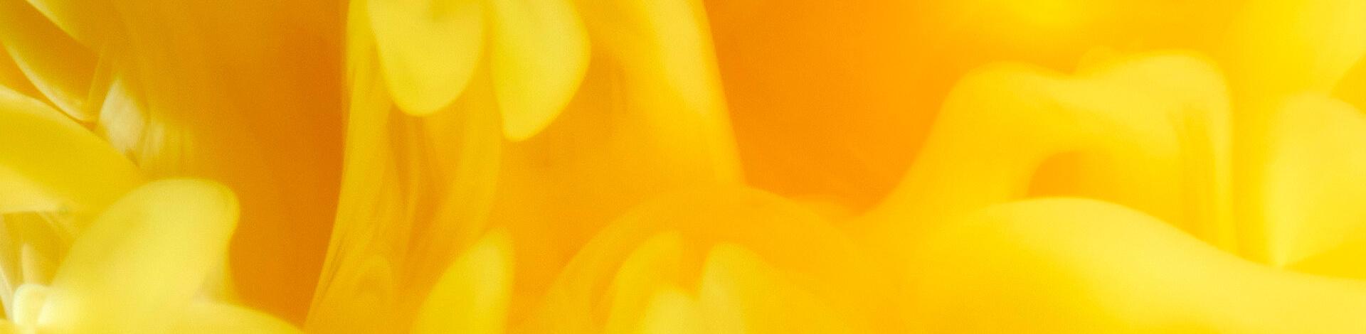 Image Dynamique